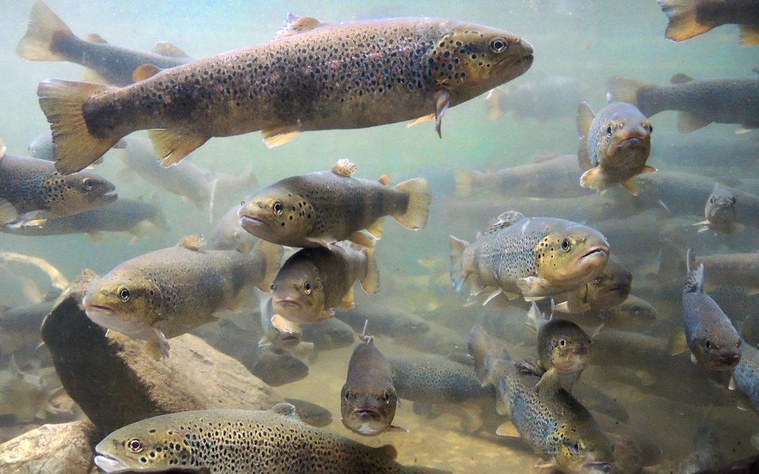 Manifestazione d'interesse agevolazioni pesca e acquacoltura